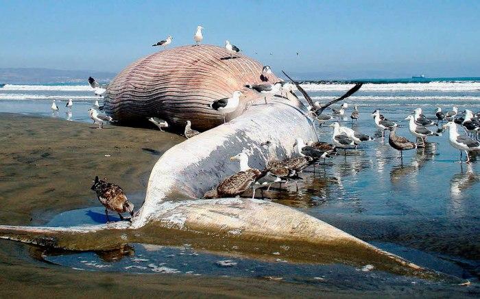 Доклад про синего кита для детей