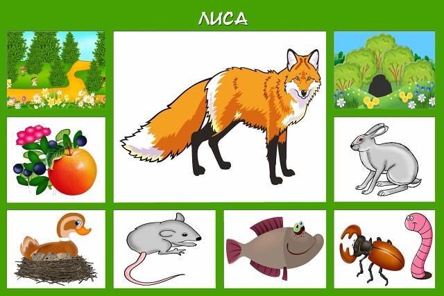 Про диких животных для детей + карточки кто где живет и чем питается