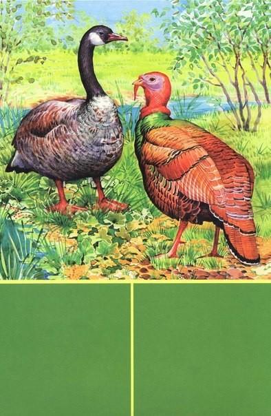 Животные красной книги и их картинки и их названия 4