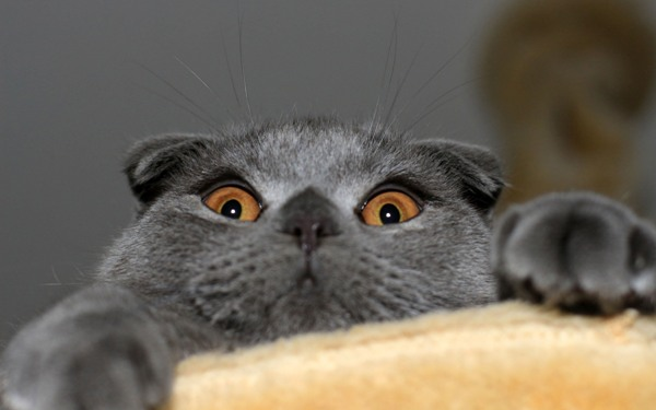 Фоторассказ о кошке