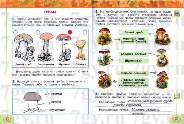 ГДЗ Окружающий мир 2 класс Рабочая тетрадь 1 часть. Плешаков, Новицкая. Ответы на задания тема грибы