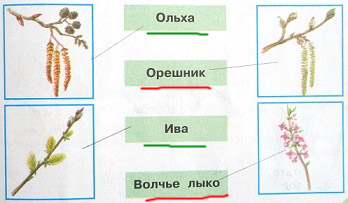 Соедини линиями рисунки и названия. Сделай это самостоятельно или с помощью учебника. Названия деревьев подчеркни зелёным карандашом, кустарников - красным