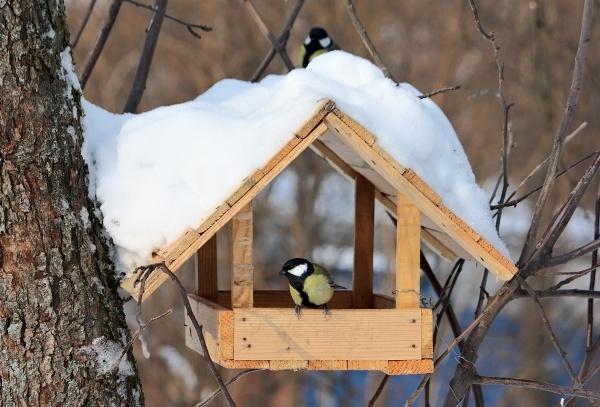 Фотография кормушки для птиц