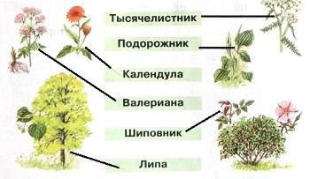 Как называются эти лекарственные растения