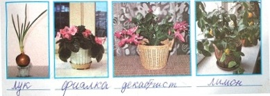Определи, какие растения зеленеют, цветут и даже плодоносят на этом подоконнике зимой. Запиши их научные или народные названия.