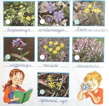 С помощью учебника подпишите названия растений.