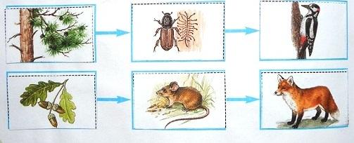 Модели цепей питания животных в природе.