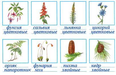 Подпишите названия растений и групп, к которым они относятся