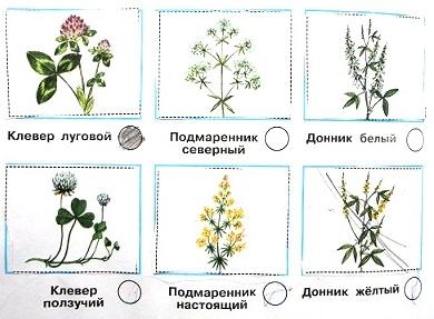 Определи растения луга