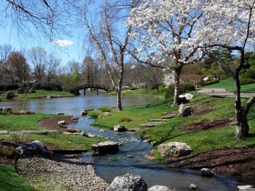 Живая природа весной картинки
