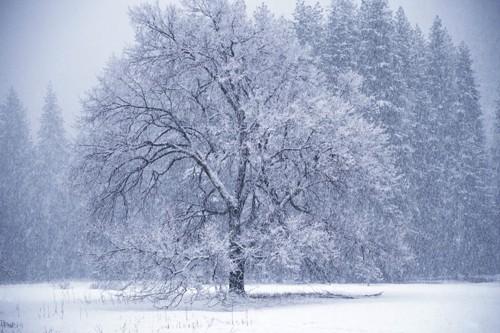 Картинки явления зимой