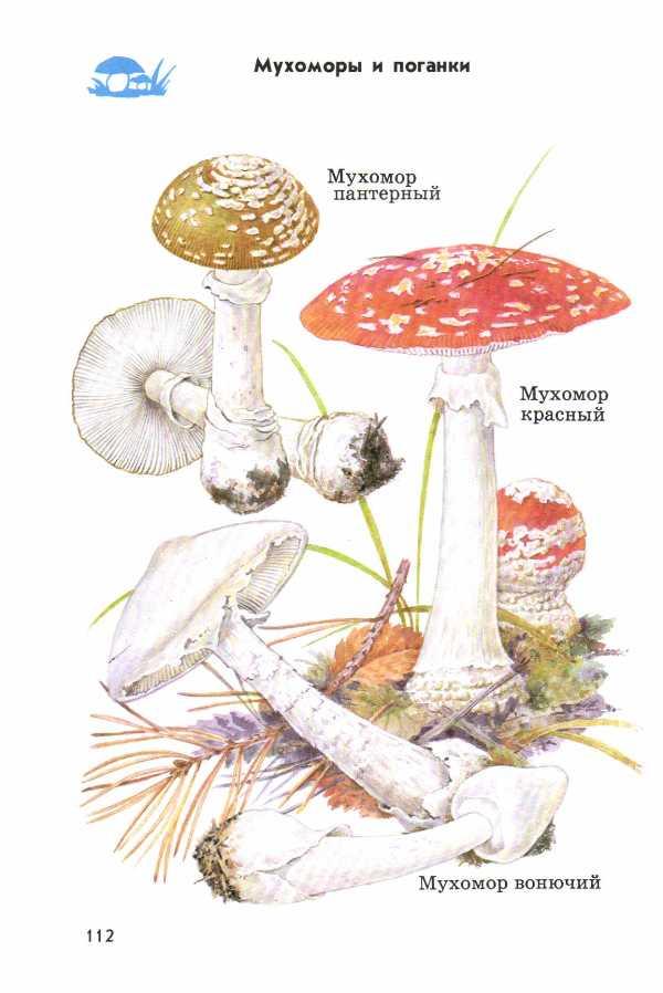 Атлас определитель грибов и лишайников От земли до неба  Атлас определитель грибов