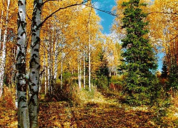 Осенние цвета картинки