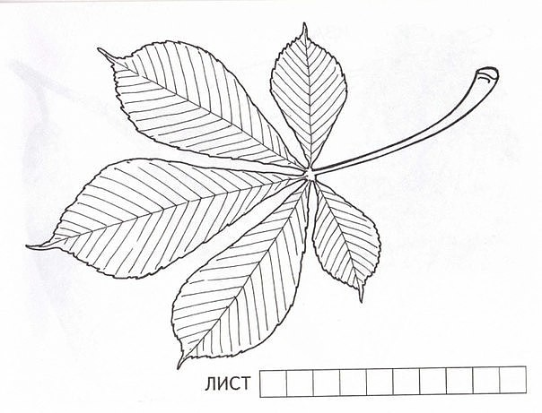 Рисуем листочками из деревьев