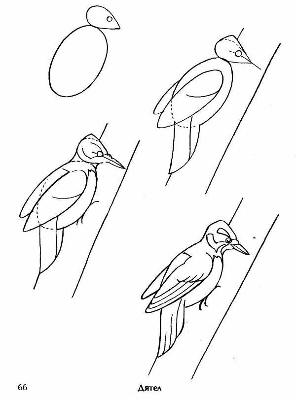 филин и сова
