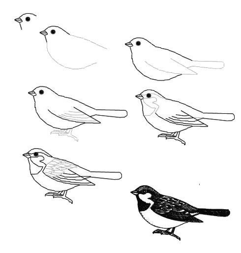 Как нарисовать птиц по схеме