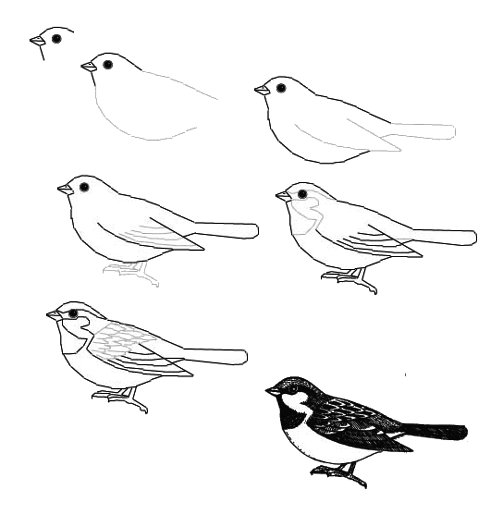 воробей. Как рисовать птиц