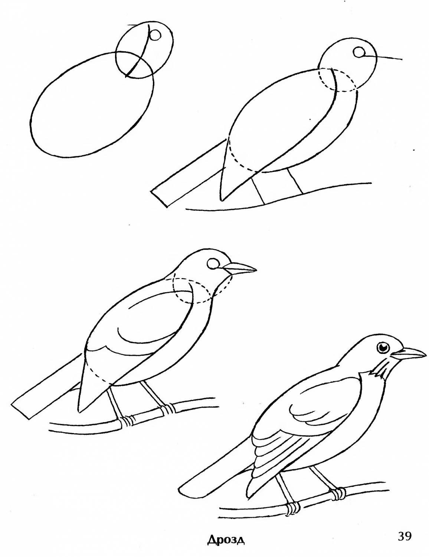 Рисунки поэтапно дятел 122