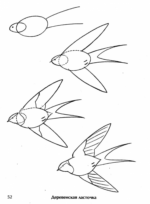 Рисование ласточка поэтапно