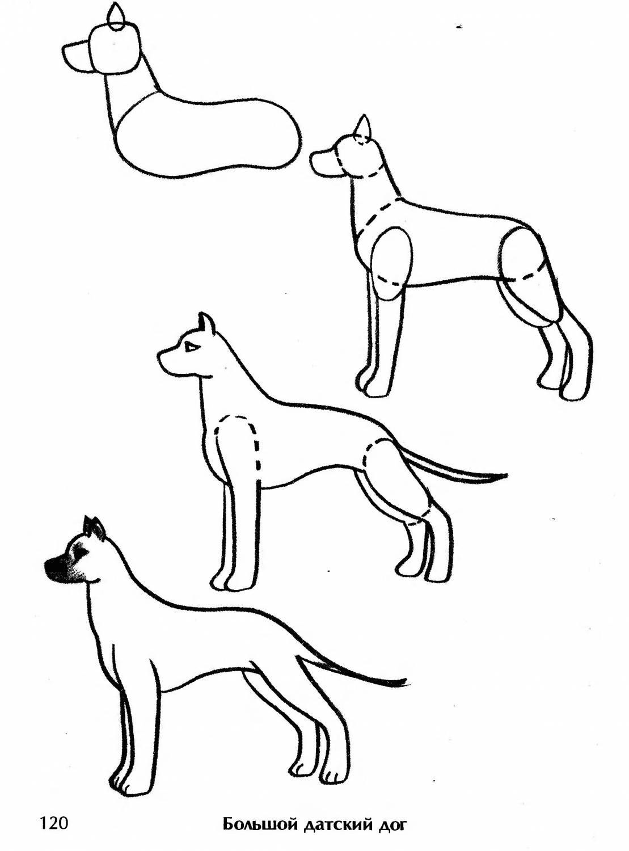 Рисуем собак по схеме
